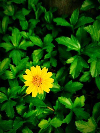 Flower oneplus2