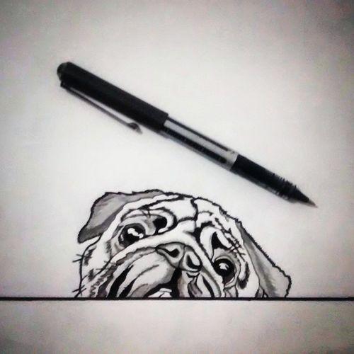 Dibujo Perro Pug Dog Draw Art Blackandwhite Illustration Creative Talentthursdaytth Drawing