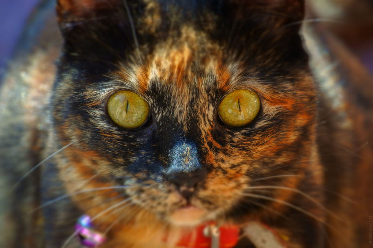 Animal Themes Animals Cats Cats Eyes Close-up Domestic Cat Feline Nikon 1 J5 No People Pets Pets Lover