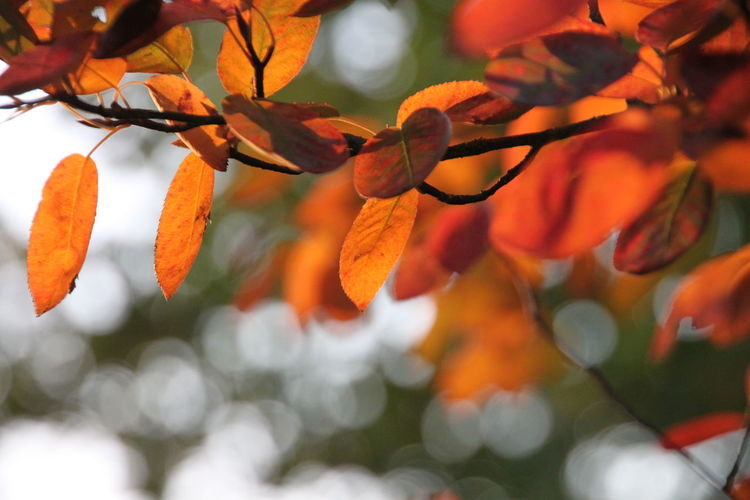 Beauty In Nature Branch Close-up Day Freshness Fruit Growth Leaf Nature No People Orange Color Orange Tree Outdoors Tree
