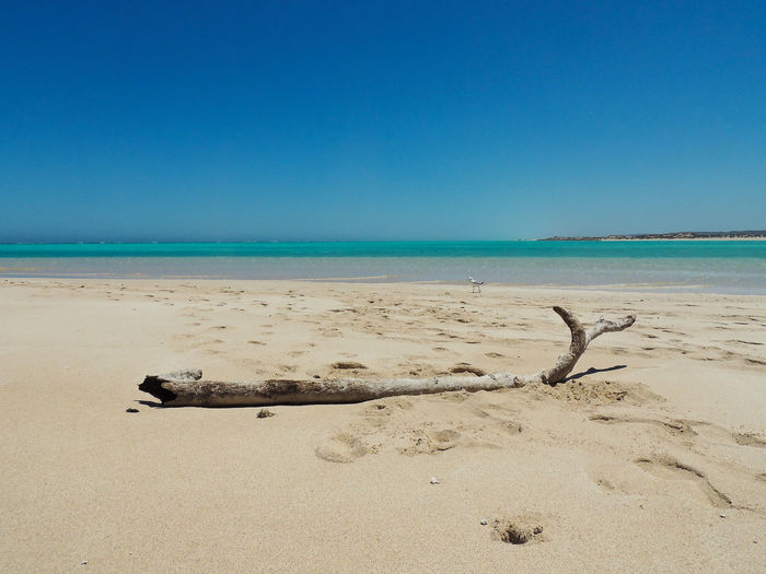 Scenic view of driftwood on beach against clear blue sky