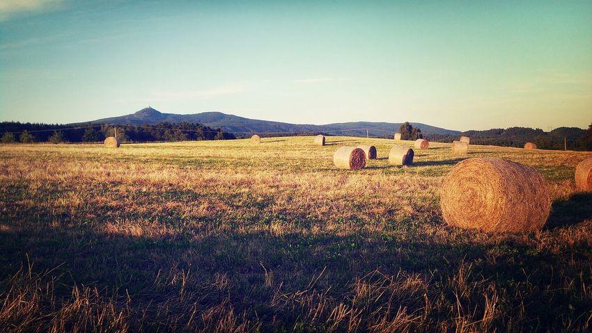 Landscape Jested Summer