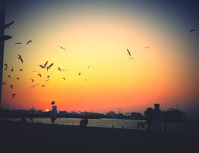 Burj El Arab Flying Sunset Bird Flock Of Birds Silhouette Animal Themes Beauty In Nature Group Of Animals Scenics Spread Wings Nature Sea Beach EyeEm Sunset Lovers EyeEm Nature Lover EyeEm Best Shots - Sunsets + Sunrise