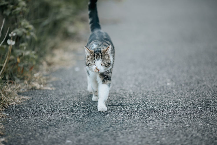 Portrait of cat on road in city