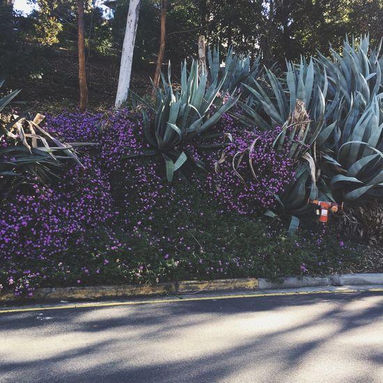 flowers Flowers Purple Purple Flower