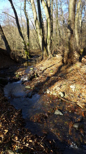 Forest, No People, Outdoors, Nature, Wild, Creek, Brook in Borzsony mountain, Hungary