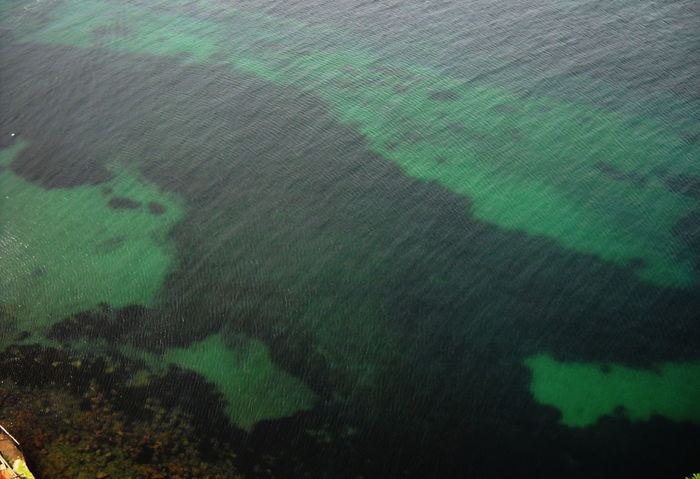 2012 Clean Water Beautiful Day Full Frame Green Color Ischia Island Nature No People Outdoors Sea Underwater Photography
