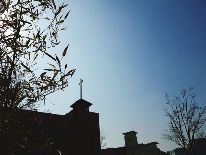 Church Skyline Suwon, Korea Bird Tree City Bare Tree Silhouette Sky Architecture Building Exterior Built Structure