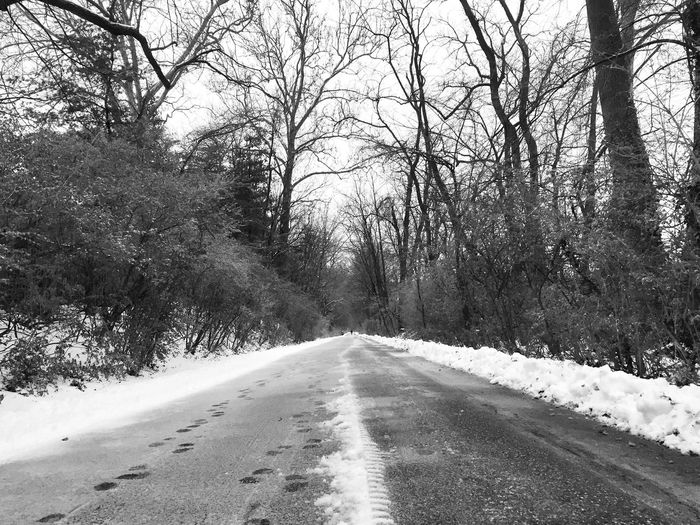 Tree The Way Forward Road Nature Bare Tree Scenics Tranquility Outdoors Empty Road Day Tranquil Scene No People Winter Landscape Beauty In Nature Snow Cold Temperature Sky