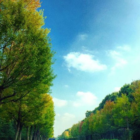 並木道 色づき 秋の風景