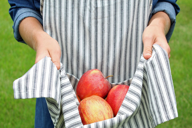 Apple picking Agriculture Apron Autumn Apple Picking Apples Fall Farm To Table Female Food Fruit Home Stead Midsection Outdoors Picking Season