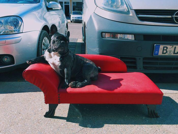 Here Belongs To Me Playground Urban Landscape Wanderlust Sunday Dogs Urban Spring Fever Happy Time Sunbathing Capture Berlin
