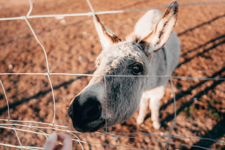 High angle view of donkey standing by fence