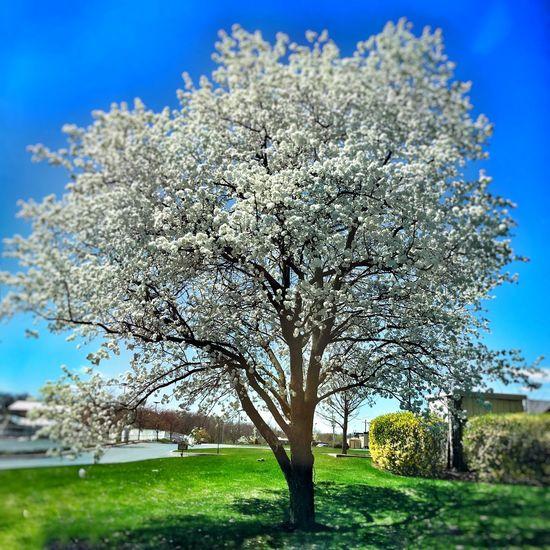 Showcase April Nature Skylovers Beautiful Nature Trees Harrisburg, Pa Spring Natural Beauty Beautiful Blue Sky Sky Harrisburg PA Harrisburg Blue Wave
