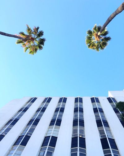 Looking Up Palm Trees Los Angeles, California Pastel Power