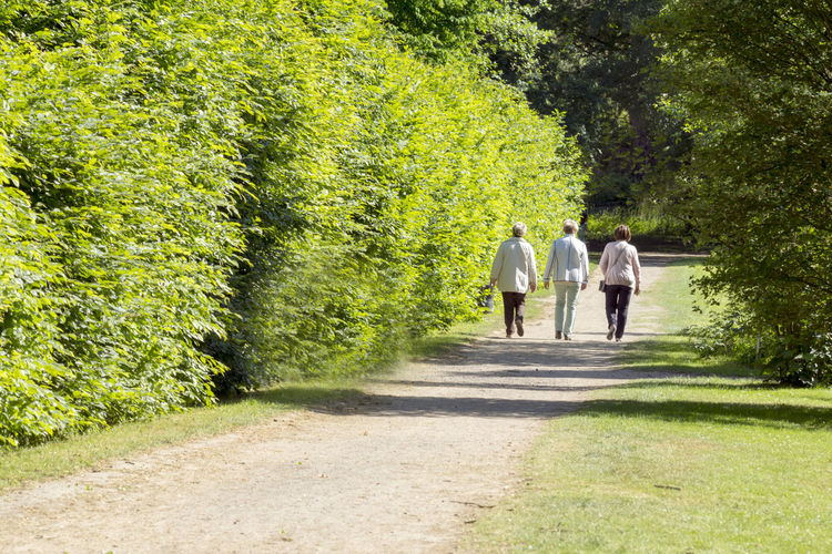 Three seniors go for a walk in the spa park, spring Adult Casual Clothing Day Direction Footpath Green Color Group Of People Motion Nature Outdoors People Plant Rear View Sunlight Tree Walking Women