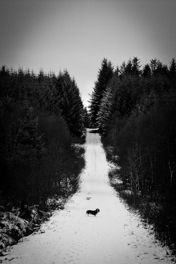 Dog in the Woods Animal Themes Animals In The Wild B&w Basset Hound Bird Blackandwhite Clear Sky Day Dog Forest Ireland Lake EyeEm Premium Collection Nature No People Outdoors Pet Sky Snow Tree Water Winter Tranquil Scene Beauty In Nature Cold Temperature The Great Outdoors - 2017 EyeEm Awards