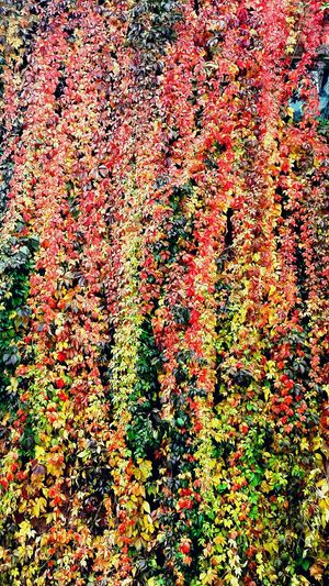 ботанический мойгород Plant осень прекрасна 🌾🍂🍃 Russia Москва Beauty In Nature No People Nature My Year My View Enjoy The New Normal ботанический сад Осень 🍁🍂 Природа Day