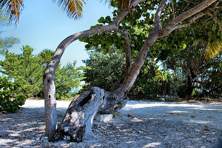 Beach Life Beach Photography Beachphotography Fort Zachary Taylor Beach Tree Tree_collection  TreePorn Trees