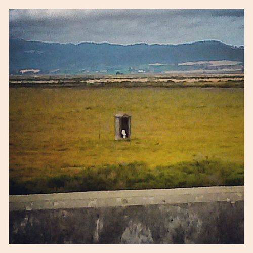 Clouds Hills Freeway Vallejo sonoma outhouse in the middle of a field nowhere scenery