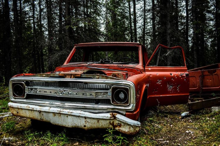 Old Truck Headlight Abandoned Tree Car Forest No People Bad Condition Growth Day Outdoors Nature Truck Bullet Bullet Holes Chevrolet Chevy