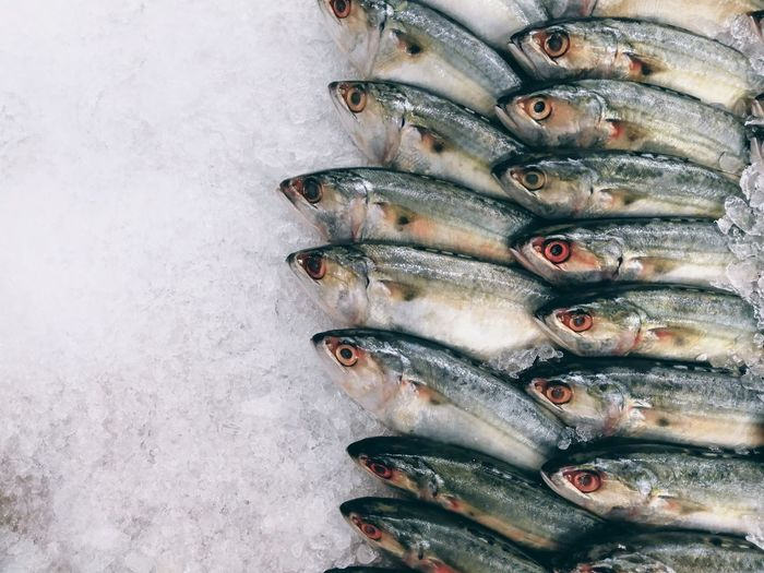 Close-up of fish on ice