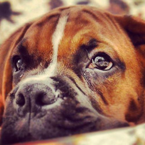 Dog Cane Triste Espressioni espressivo lacrime photo foto animali