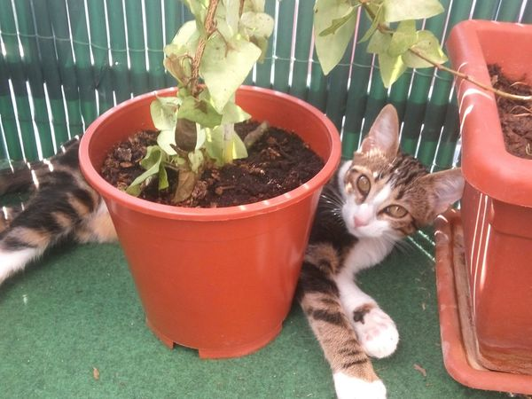 Pets Domestic Cat Domestic Animals Animal Themes Animal Young Animal Feline Day Plant Cute Kitten Animal_collection Animal Photography Animals Cat Cutecat Relaxation Relax Relaxing