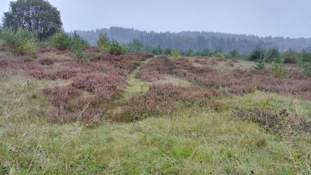 Day Field Road Grass Heather Flower Landscape Nature No People Outdoors