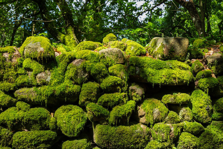Sunlit mossy stone wall in Sistelo, Portugal Fairytale  Mossy Nature Portugal Portuguese Sistelo Sunlight Beauty In Nature Botanical Garden Botany Garden Green Color Growth Moss Mossy Forest Mossy Rock Mossy Stone Nature No People Outdoors Passadiço Passadiços Plant Sun Tranquility
