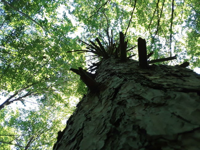 Tree Low Angle View Nature No People Beauty In Nature Sky Tranquility Mohican Leisure Activity Ohio Relaxation Forest Outdoors Nature