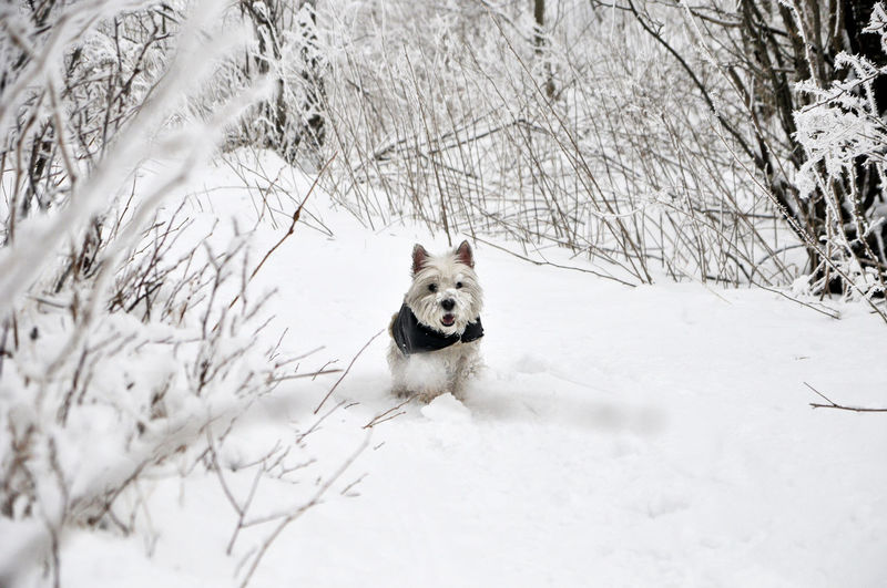 Snow One Animal