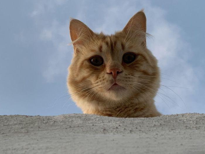 Portrait of ginger cat against sky