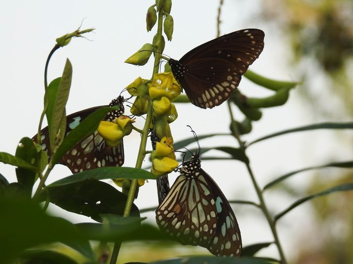 Close-up of butterfly on plant against sky