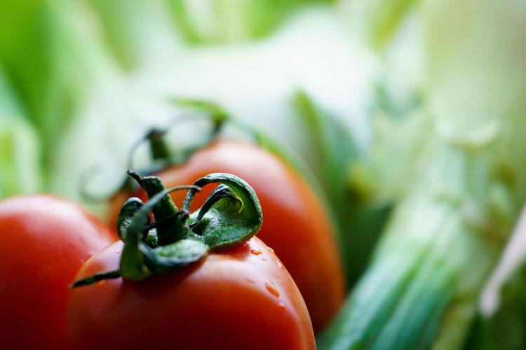 Close-up of ladybug on fruit