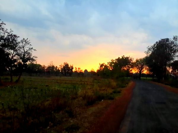 Just Taken Beauty In Nature Blur Calm Colourful Sky Cruising Landscapr On A Long Ride Outdoors Road Roadtrip Scenics Sky Standing Trees Sunset Sunset Light The Way Forward Tranquil Scene Tranquility Trees First Eyeem Photo