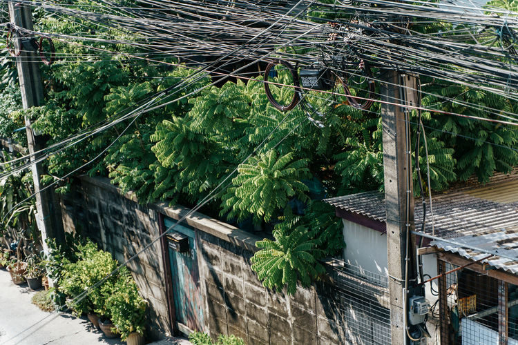Trees grow wild in a residential area of Bangkok, Thailand Built Structure Architecture Plant Tree Green Color Building Exterior Nature Growth Day No People Building Outdoors Leaf Plant Part High Angle View House Metal Roof Abandoned Residential District Iron Nature Rural Scene Growing Growing Plants Electricity  Electricity Pylon