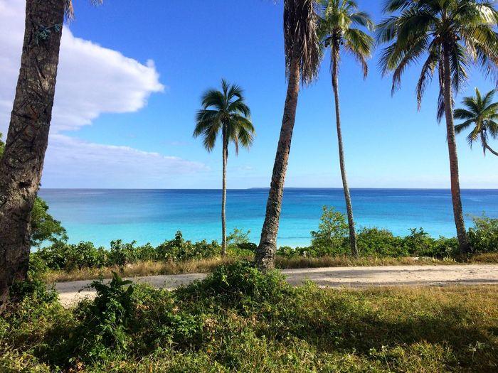 Water Tree Plant Sky Sea Beach Tropical Climate Palm Tree