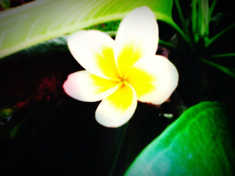 First Eyeem Photo Flower Flowers White Flower Nature's Diversities