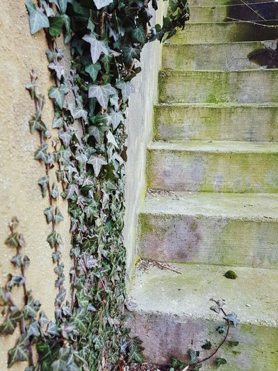 Ivy on wall next to stairs Stairs Wall Texture Old Green Textured  Grunge Ivy Close-up Plant Moss Steps
