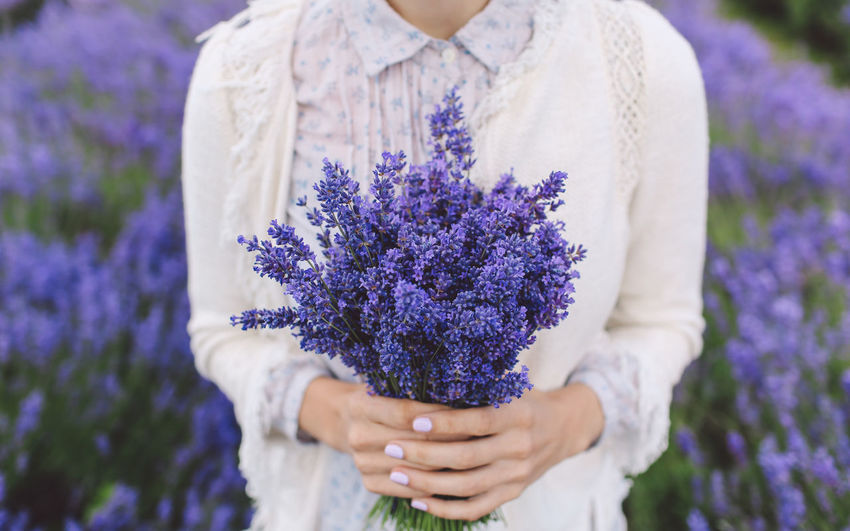 Midsection Of Woman Holding Lavender Flowers On Field