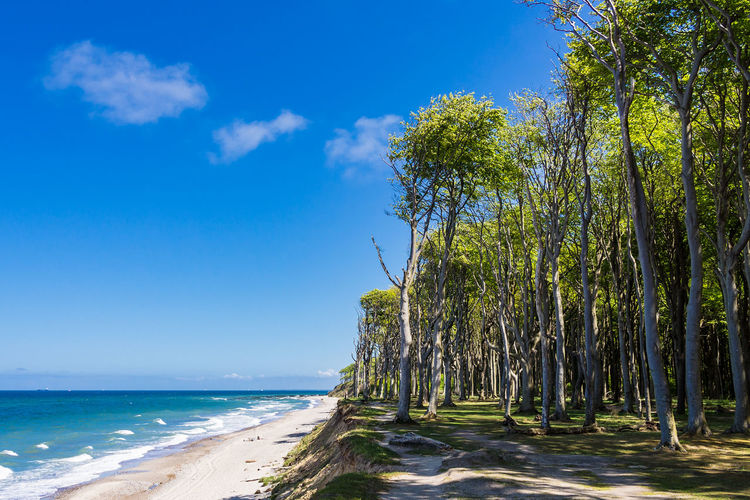 Coastal forest on shore of the Baltic Sea. Baltic Sea Beach Beauty In Nature Blue Cloud - Sky Coast Day Forest Gespensterwald Horizon Over Water Nature Nienhagen Germany No People Outdoors Scenics Sea Shore Sky Tourism Tranquil Scene Tranquility Travel Destinations Tree Vacation Water
