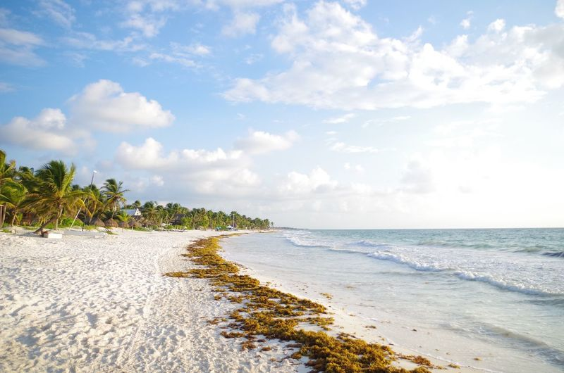 Beach south of tulum, Yucatan Peninsula Mexico. Beach Beauty Beauty In Nature Carribean Cloud - Sky Coastline Coastline Horizon Over Water Landscape Mexico Nature No People Outdoors Palm Tree Paradise Rivera Maya Sand Scenics Sea Tree Tropical Climate Tulum Vacations Water White Sand