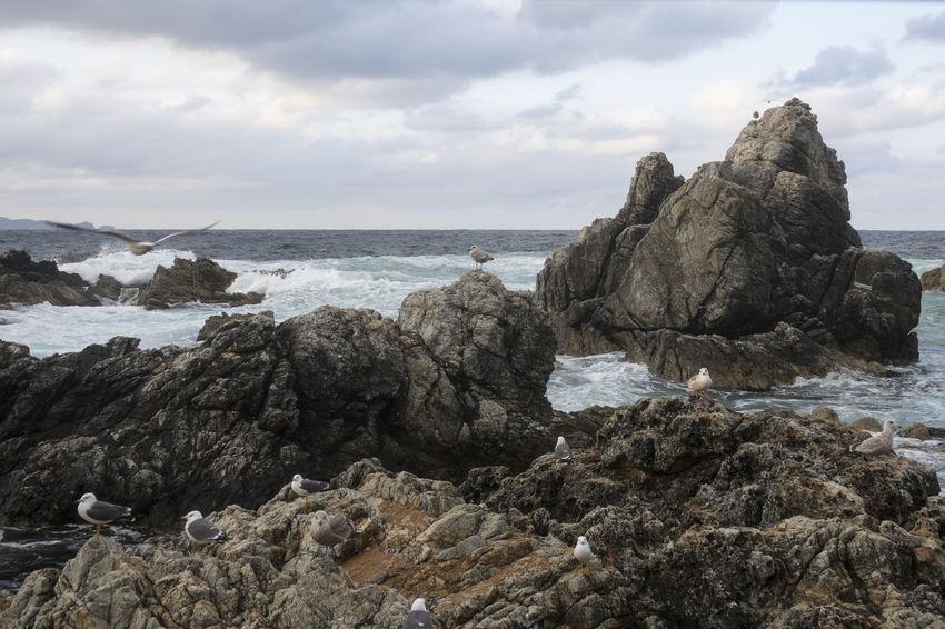 View of Janghohang, Samcheok, Gangwondo, South Korea Beach Beauty In Nature Cloud - Sky Day Horizon Over Water Janghohang Landscape Nature No People Outdoors Rock Rock - Object Scenics Sea Seagull Seaside Sky