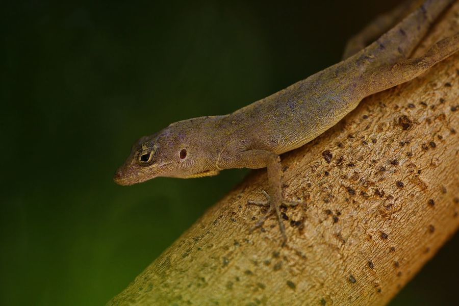 Animal Themes Animal Wildlife Animals In The Wild Close-up Day Lizard Nature No People One Animal Outdoors Reptile Tree