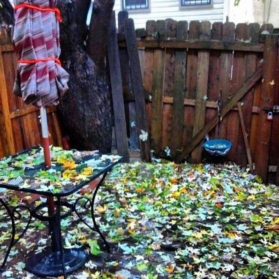 My little space out back after Sandy's visit.