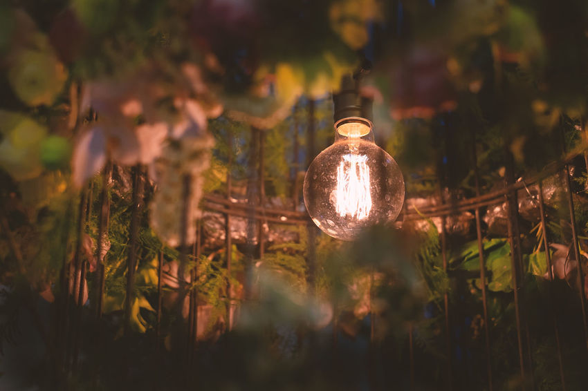 Lighting Equipment Illuminated Light Bulb Electricity  Plant Selective Focus No People Close-up Glowing Night Tree Electric Light Light Glass - Material Growth Nature Focus On Foreground Outdoors Electric Lamp