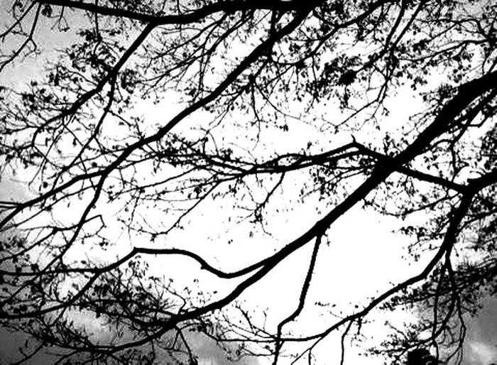 Black & White Taking Photos Enjoying Life B&W Portrait Peoplephotography Eye4photography  EyeEm Best Shots EyeEm Nature Lover