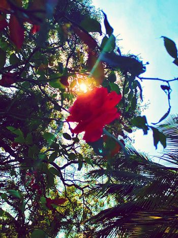 Tree Nature Low Angle View Beauty In Nature Flower Freshness