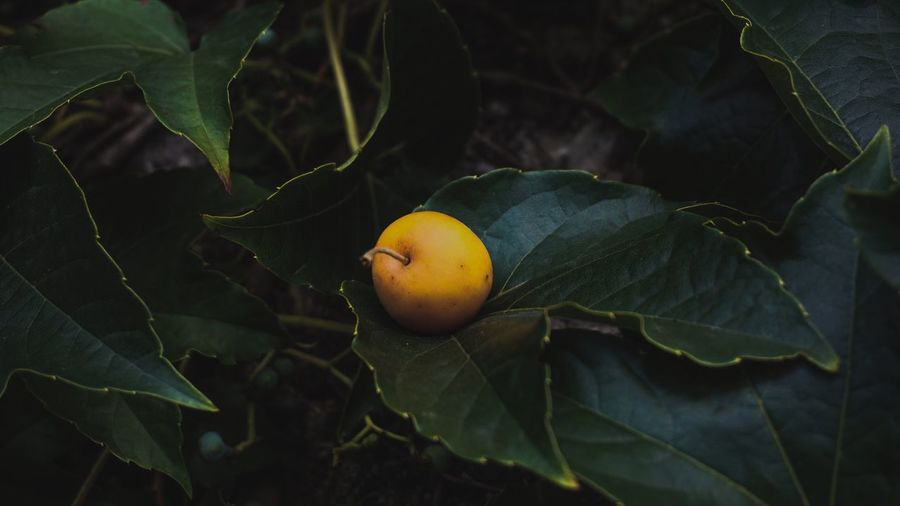 EyeEm Selects EyeEm Best Shots Leaf Plant Part Healthy Eating Food Fruit Food And Drink Freshness Growth Wellbeing Plant Close-up No People Nature Green Color Fruit Tree Day Beauty In Nature Outdoors Tree